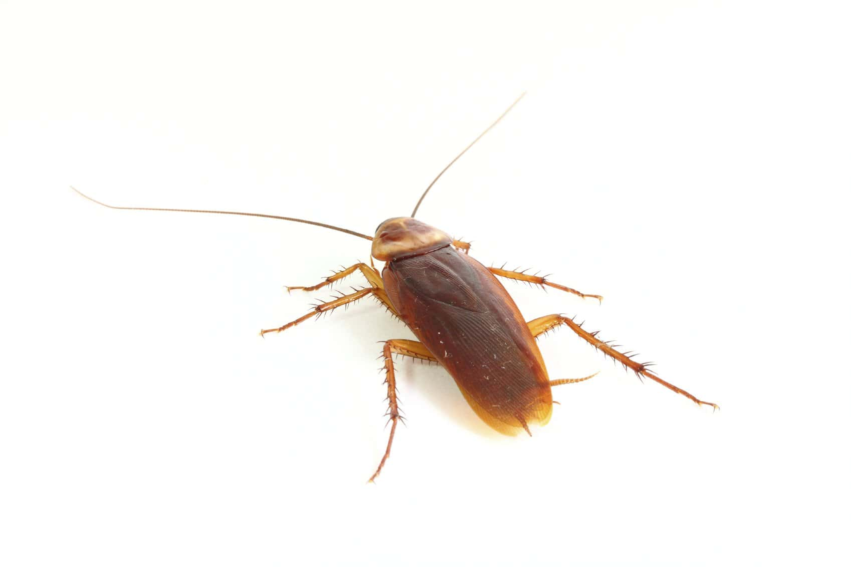 detectar cucarachas en casa 191d243nde las busco