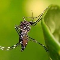 Piden la colaboración ciudadana para el control de mosquitos