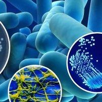 Detección rápida de la Legionella