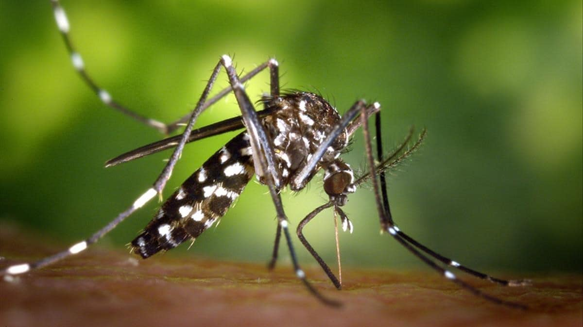 El mosquito tigre sigue avanzando en España