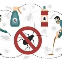 El control de plagas también es importante en verano