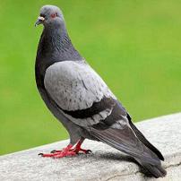Alimentar o no a las palomas, he ahí la cuestión