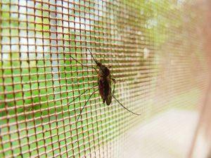 mosquitos en verano
