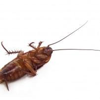 Humedad y calor: cómo saber si tienes una plaga de cucarachas