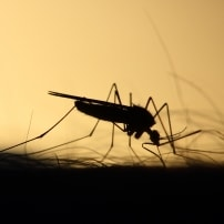 Plaga de mosquitos en Castellón
