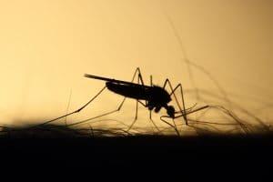 plaga de mosquitos en castellon