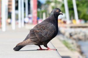 el control de plagas en Vizcaya es importante