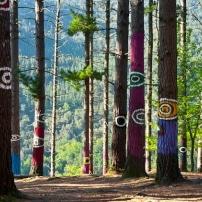 El bosque de Oma afectado por la banda marrón