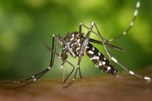 el mejor antimosquitos