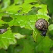Plagas más habituales en el jardín