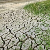 Las plagas se incrementarán debido al calentamiento global