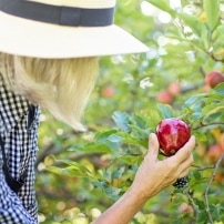 5 Pesticidas caseros para eliminar plagas en el huerto o el jardín