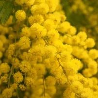 Las plantas invasoras favorece la aparición de plagas