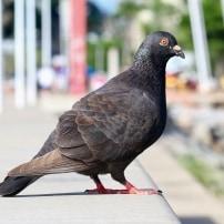 Por qué el control de plagas en Vizcaya es importante