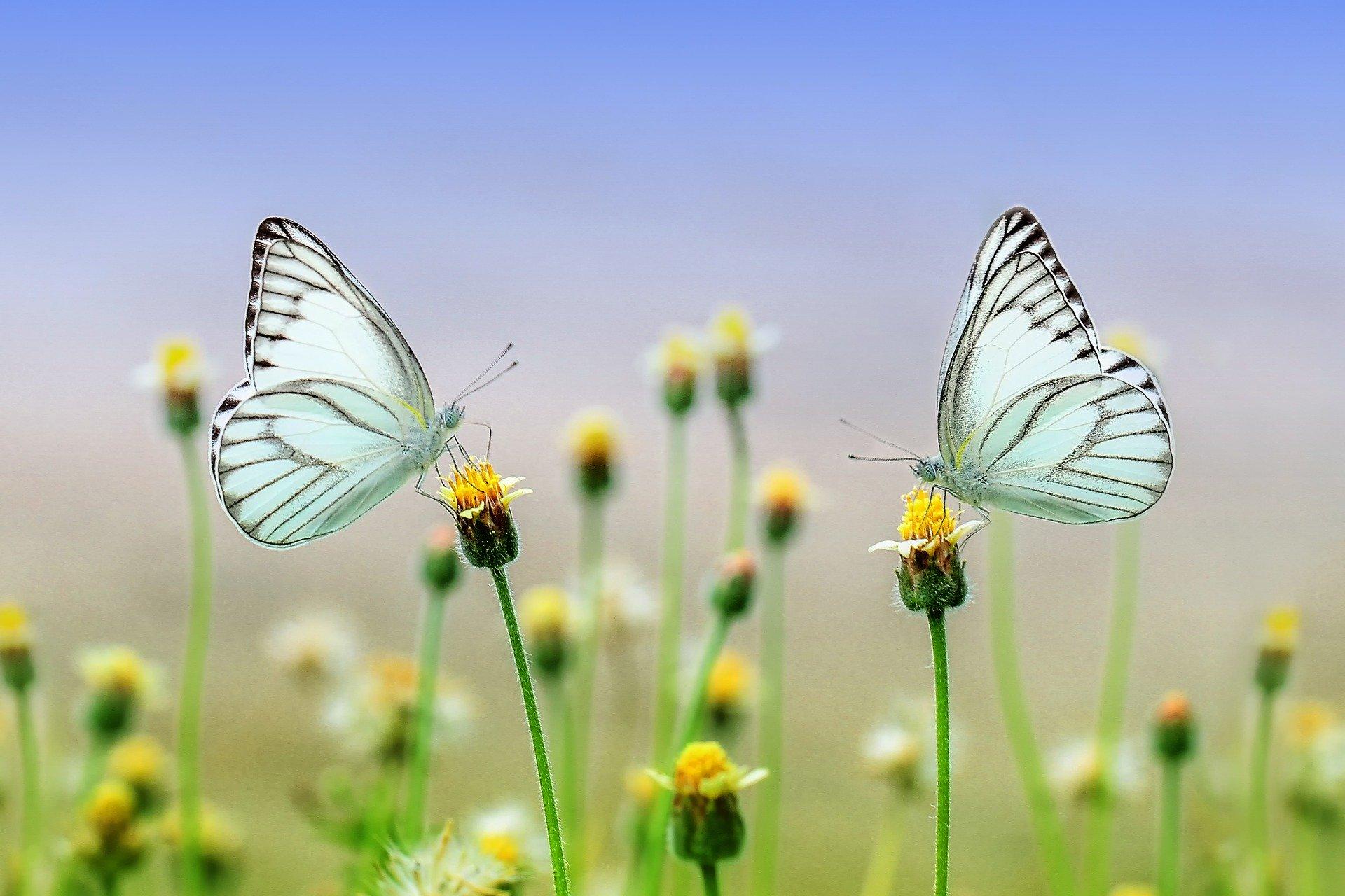 insectos en peligro de extinción