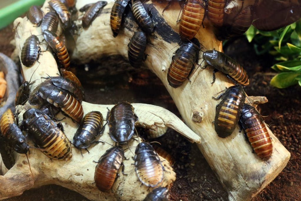 cucarachas indestructibles