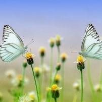 Los insectos están desapareciendo, los insectos están en peligro de extinción.
