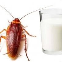 Leche de cucaracha, el alimento de un futuro no tan lejano.