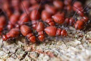 daños que causan las termitas