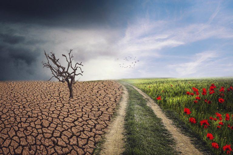 cambio climático en el incremento de plagas