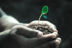 ¿Por qué tenemos plagas y enfermedades en las plantas?