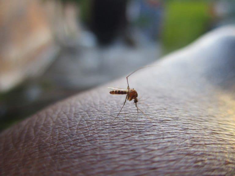 como evitar picaduras de mosquitos este verano