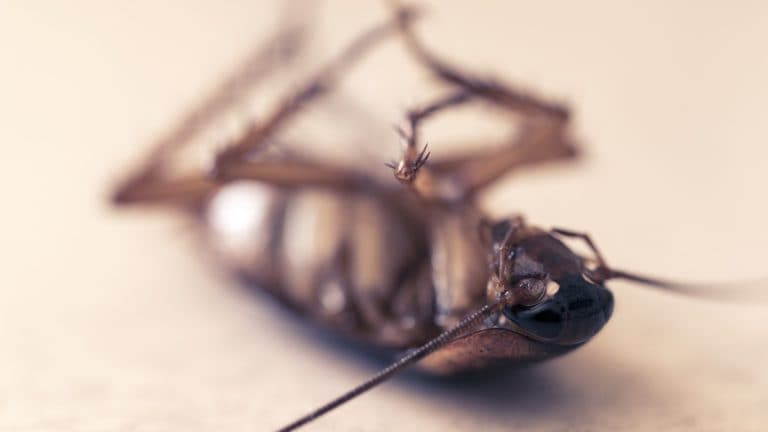 ¿Deberías preocuparte por una cucaracha en casa?