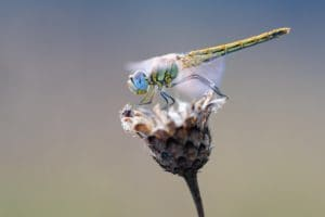 10 curiosidades sobre insectos